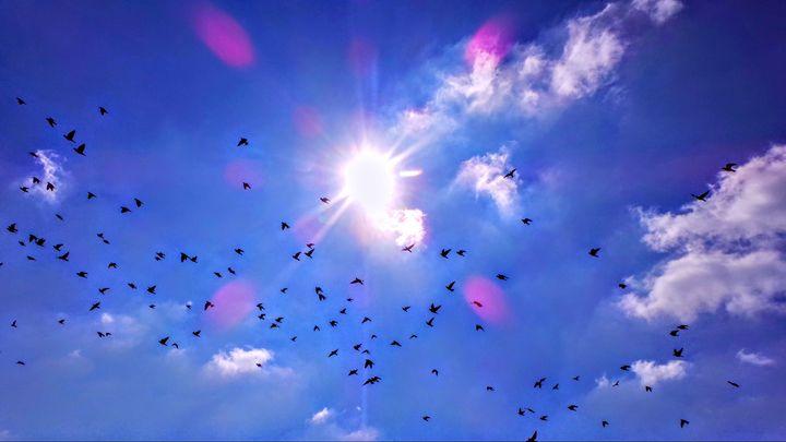Sapphire Skies - Jonathan M. Schwartzman