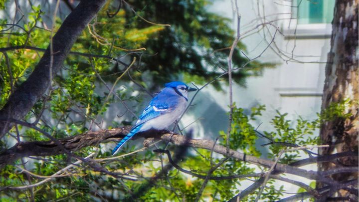 Flash Of Blue - Jonathan M. Schwartzman