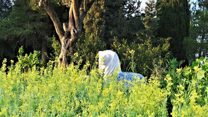 Lion Crouching In The Brush - Jonathan M. Schwartzman
