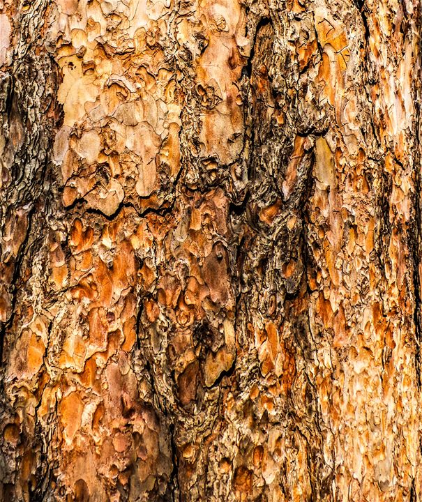 Bright Orange Pine - Jonathan M. Schwartzman
