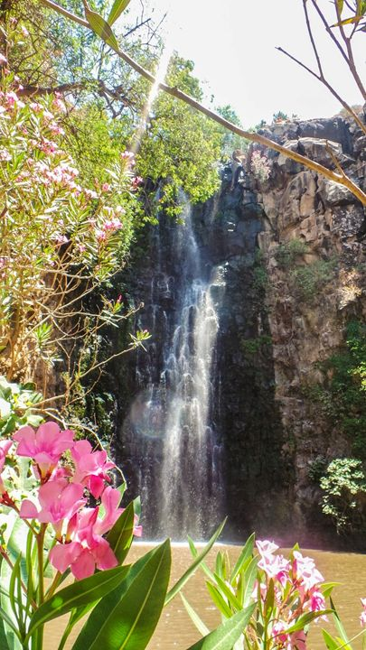 Flower Showers & Falls - Jonathan M. Schwartzman