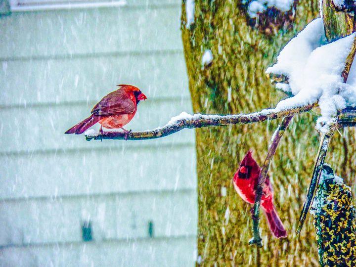 Winter Reds - Jonathan M. Schwartzman