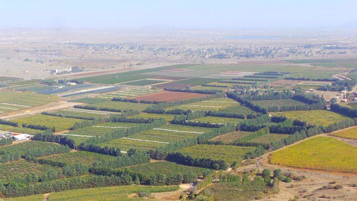 Vineyards Of The Goland - Jonathan M. Schwartzman