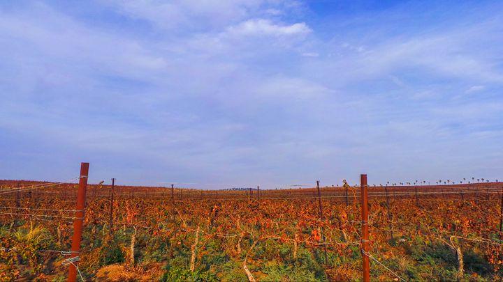 Kibbutz Vineyards - Jonathan M. Schwartzman