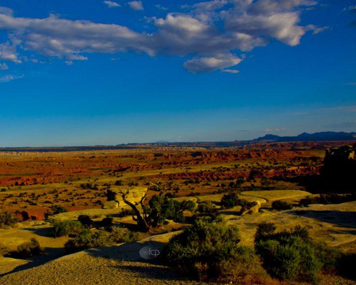 Desert Landscape - Mr. and Mrs. Carter