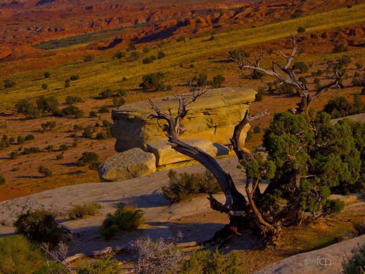 Surreal Desert Tree - Mr. and Mrs. Carter