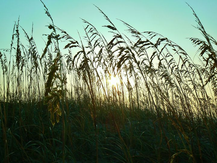 Through The Reeds - O'Neal Photography