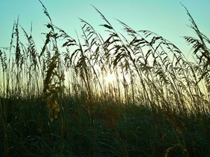 Through The Reeds
