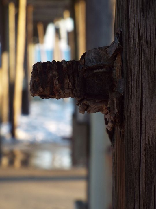 Steel in Wood - O'Neal Photography