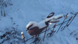 Frosty Rooster
