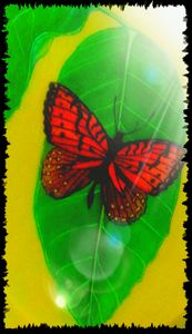 Butterfly on leaf one