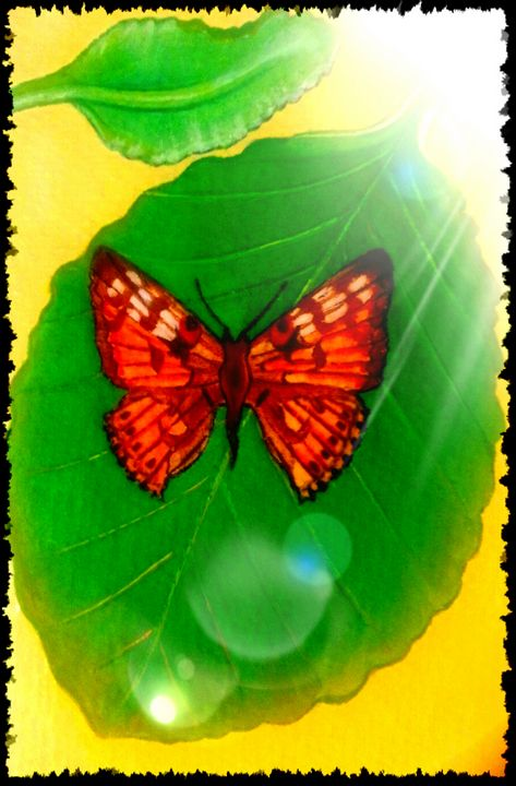 Butterfly on leaf Two - At The Unicorn