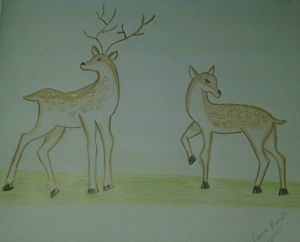 Pair of deers