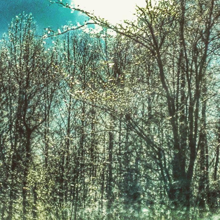 glass trees - SAR