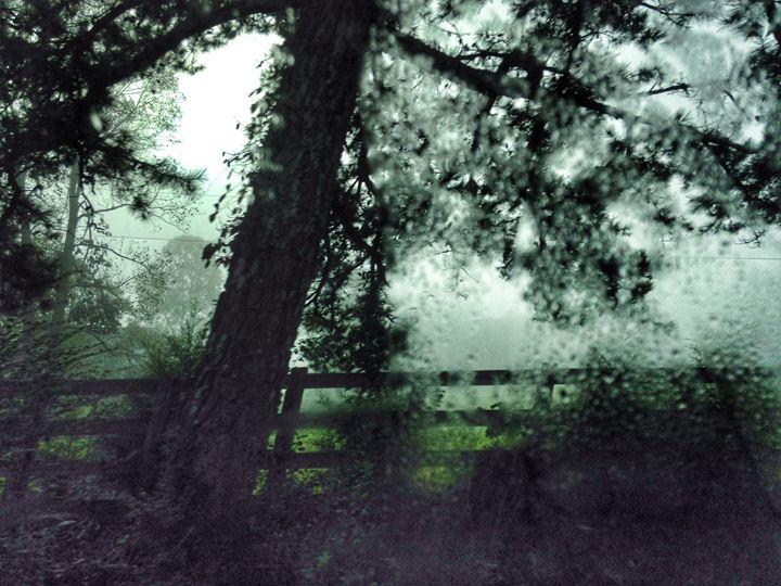 Rainy Day - SAR