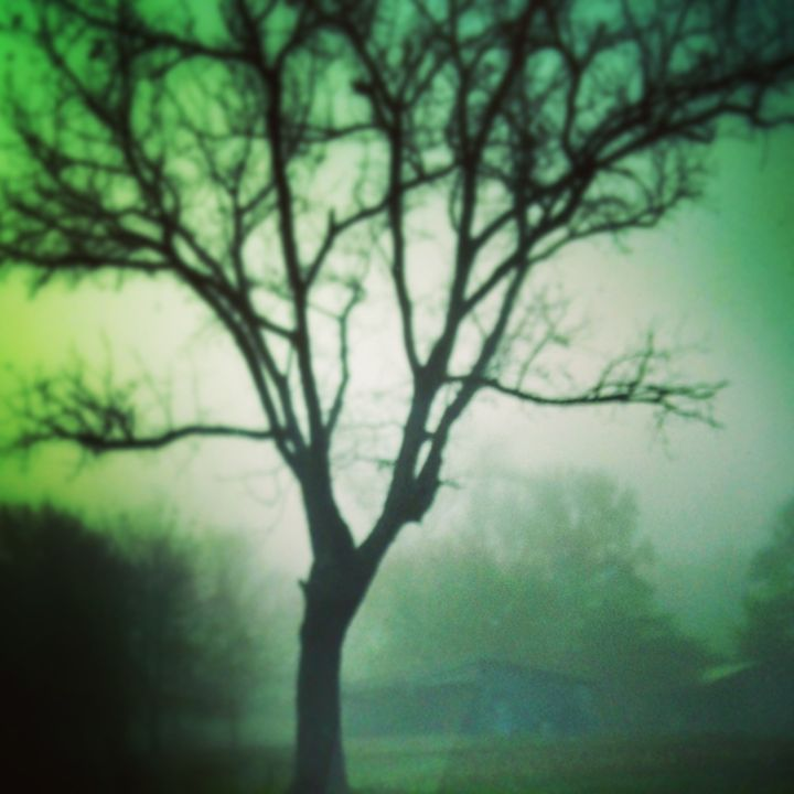 foggy tree - SAR