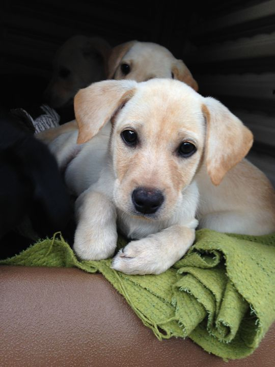 Puppy Love - SAR