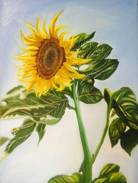 Morning sunflower - Sheetami