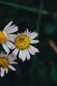 Floral raindrops