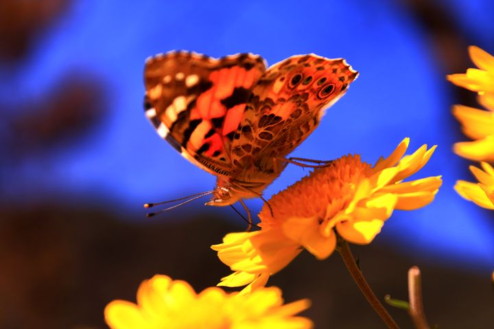 The Thirsty Butterfly - Ma Lilia Pedellume - GIK Photography