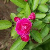 Blossom of soul