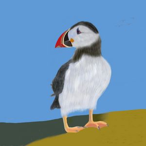 The lonely puffin
