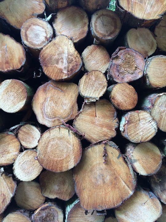 Fresh Timber - Vinny Flynn
