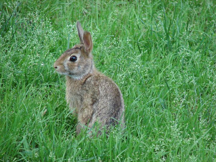 easter bunny - Photos