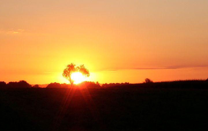 Sunset Fields - Photos
