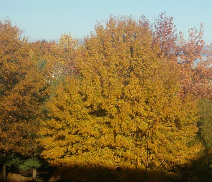 fall colors - Photos