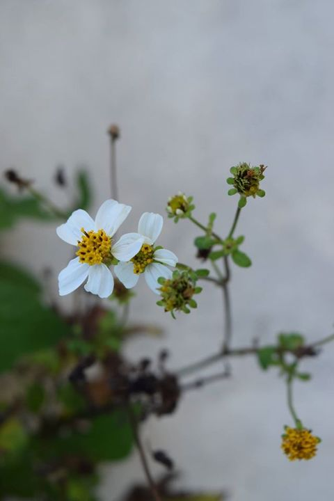 White - Photography By Shao H.