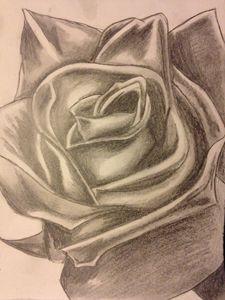 Still rose