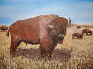 Bison - Todd Zinda