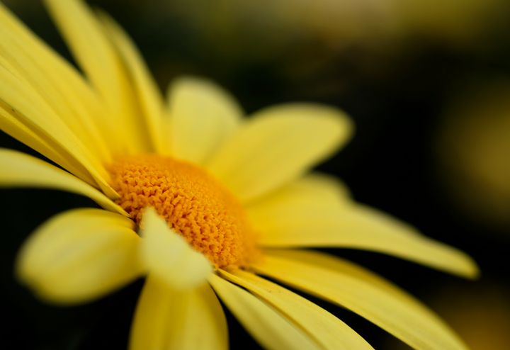 Flower of The Yellow Sun - Natural Born Talents