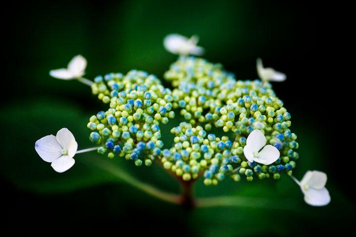 Flower UFO - Natural Born Talents