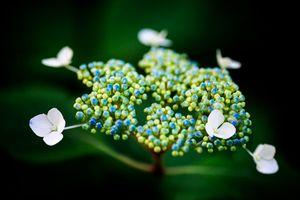 Flower UFO