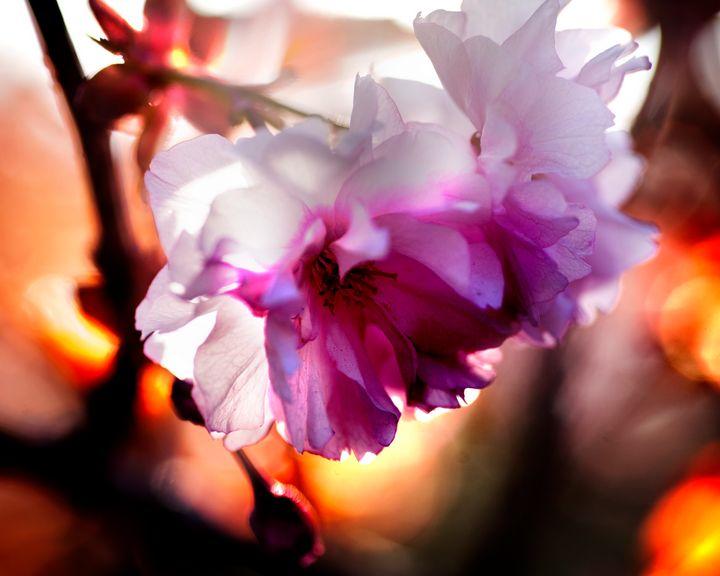 Evening Blossom I - Natural Born Talents