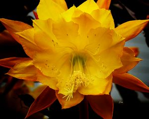 Flower Blaze