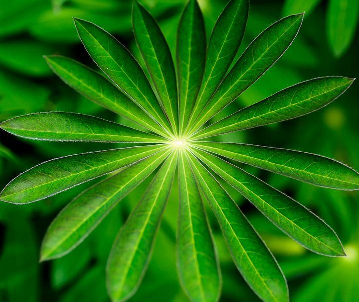 The Green Star - Natural Born Talents