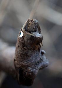 The Yawning Turtle Stick