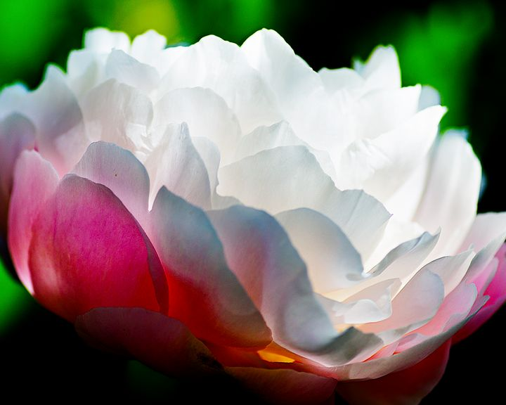 Bloomed - Natural Born Talents