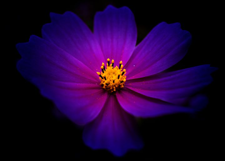 Light of Purple - Natural Born Talents