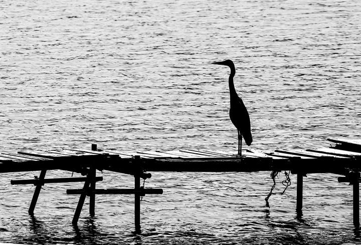 Standing on the Dock of the Bay - Natural Born Talents