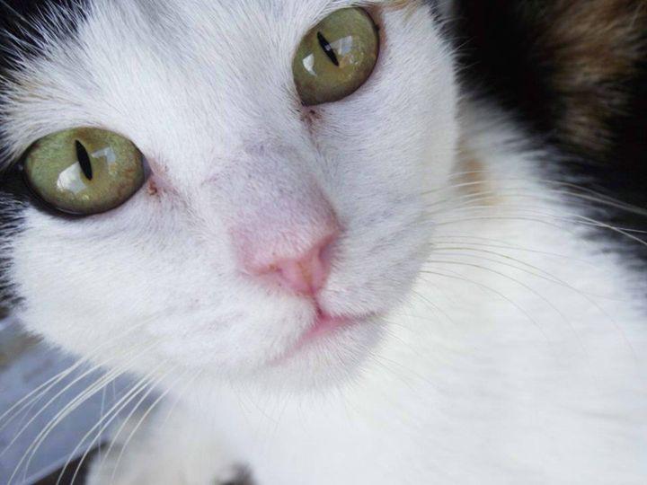Cat Eyes - MarshmallowKisses