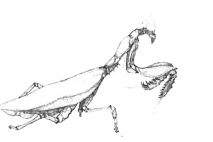 mantis - wolf