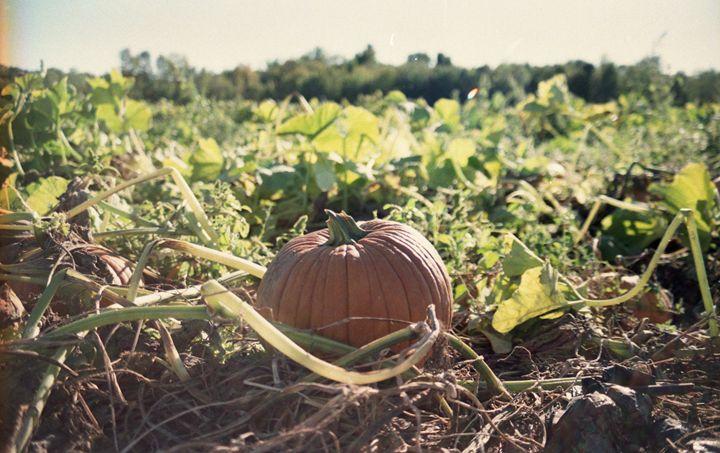 Pumpkin Patch - Korren Grass Photography