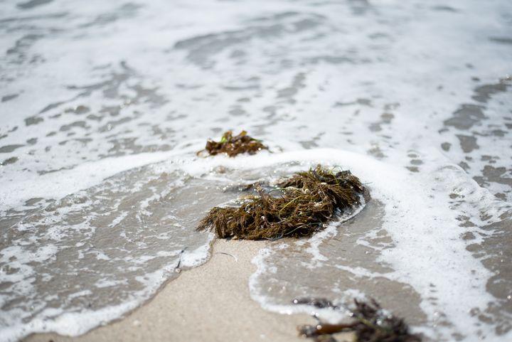 Moss Landing - Korren Grass Photography