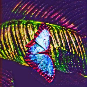 Lights Beautiful Butterflies