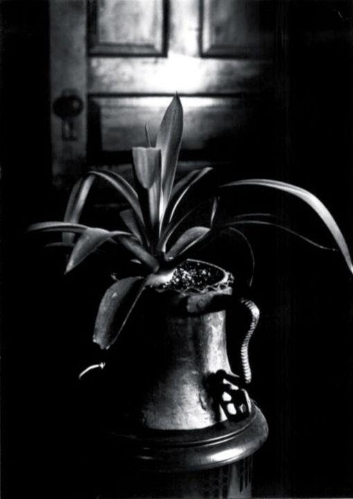 Plant still life - Mark Goodhew Photography