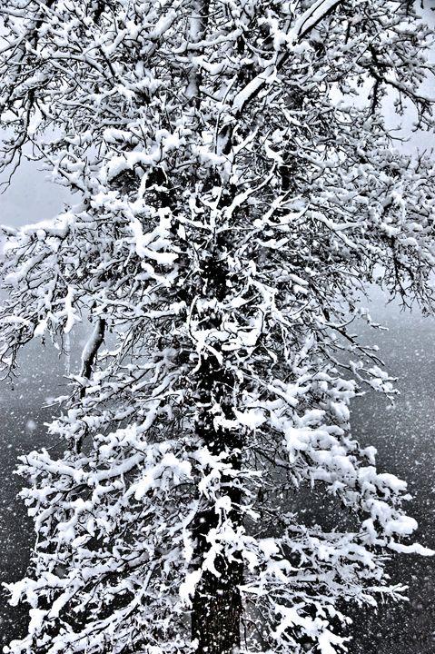 Winter Wonders - Mark Goodhew Photography